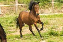 caballos-en-manada-1-705x471