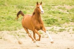 caballos-en-manada-2-705x471