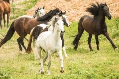 caballos-en-manada-5-705x471