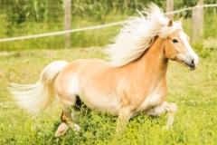 caballos-en-manada-6-705x530
