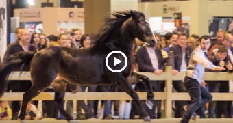 MIRON BOCOCI - Madrid Horse Week 2015